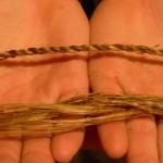 Тетива из волокон ели