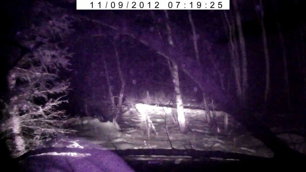 Ночная охота на авто