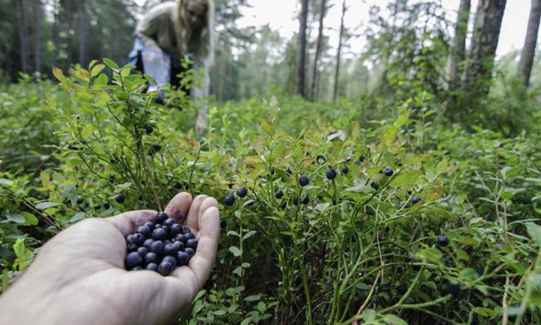 Поиски пропитания в лесу