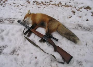 Охота на лису с манком