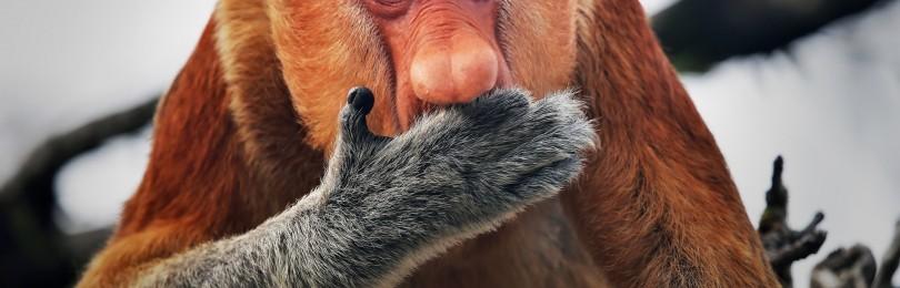 Животные с самыми длинными носами