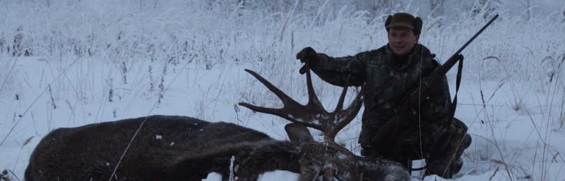 """Гон лося. Охота на лося на реву"" смотреть видео онлайн"