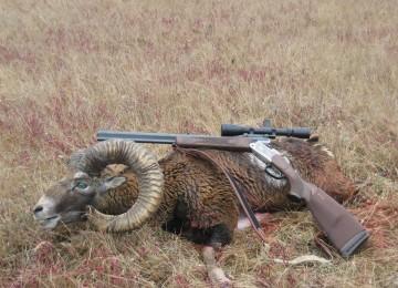 На охоту в Болгарию – одну из лучших охотничьих стран в Восточной Европе