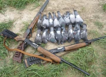 Охота на голубя (горлицу) с чучелами смотреть видео онлайн
