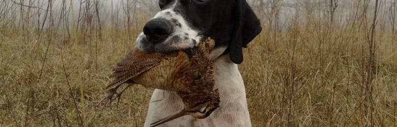 «Охота на белолобого и канадского гуся» — смотреть видео онлайн