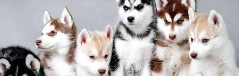 5 самых красивых пород собак
