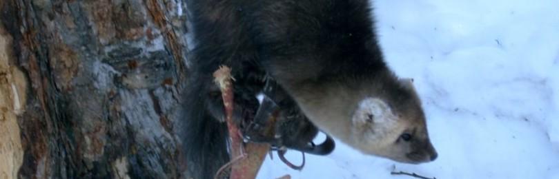 Охота на соболей смотртеь видео онлайн