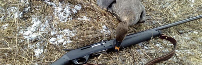 «Охота на гуся видео осень 2012 (Канада). Итоги. » — смотреть видео онлайн