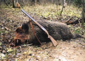 Загонная охота на копытных – организация, правила, проведение