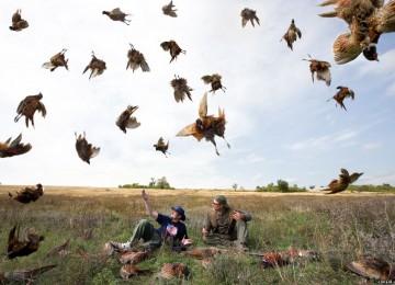 Секреты успеха на осенней гусиной охоте