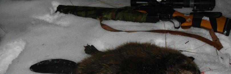 «Зимняя охота на бобра в России» — смотреть видео онлайн