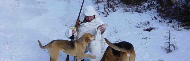 """""""Охота с гончими на кабана"""" смотреть видео онлайн"""