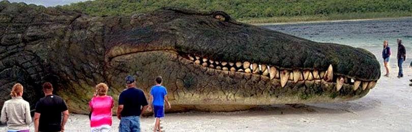 10 самых больших животных на планете