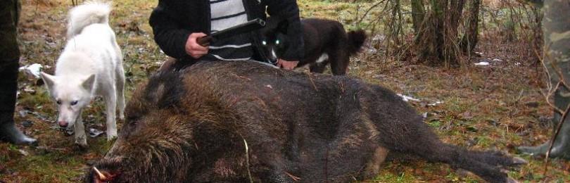 Правила меткого охотника – как точно прицеливаться и стрелять в зверя
