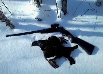 Охота на тетерева зимой в лунках