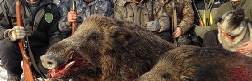 """""""Охота на кабана в украине"""" смотреть видео онлайн"""