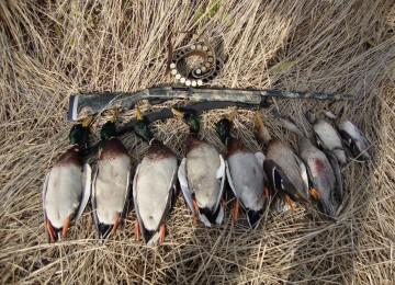 Охота на гуся в России – смотреть видео онлайн