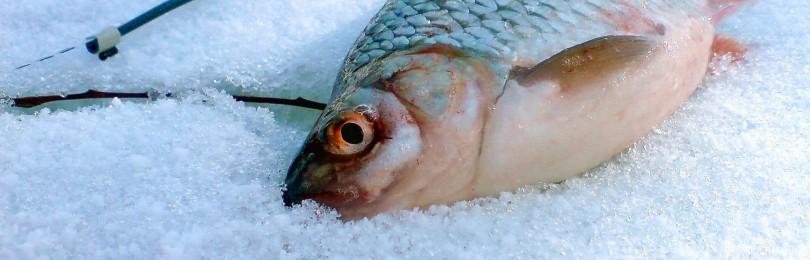 Особенности зимней рыбалки и ловли плотвы зимой
