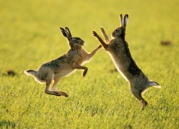 Охота на зайца в Украине – смотреть видео онлайн
