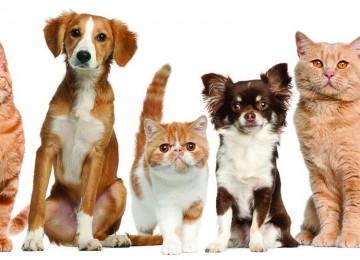 В России ограничат число домашних животных