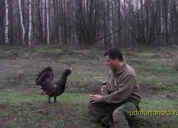Храбрый глухарь. Часть 2. смотреть видео онлайн