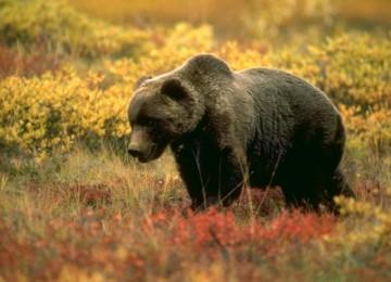 Охота на медведя на приваде (на засидке)