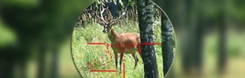 Выбираем оптику для охоты