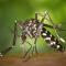 Ученые назвали самую вкусную группу крови для комаров