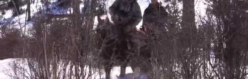 """""""Промысловая охота на соболя в Сибирской тайге ч-2"""" –  смотреть видео"""