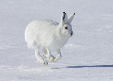 """""""Охота на зайца 2013 """" – смотреть видео онлайн"""