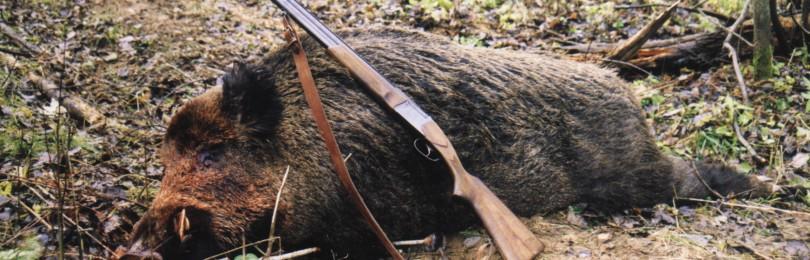 Как получить разрешение на охоту на медведя, копытных и других животных