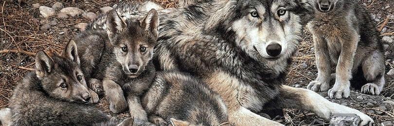 Как находить и отстреливать волчий выводок – советы