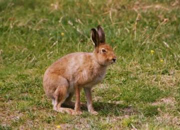 Охота на зайца – как читать следы косого и другие секреты от опытного зайчатника