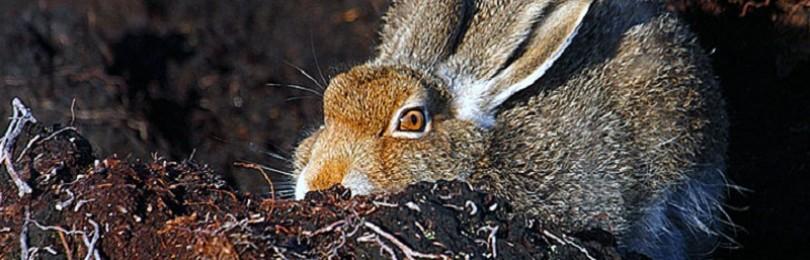 Охота на зайца зимой с подхода – смотреть видео онлайн