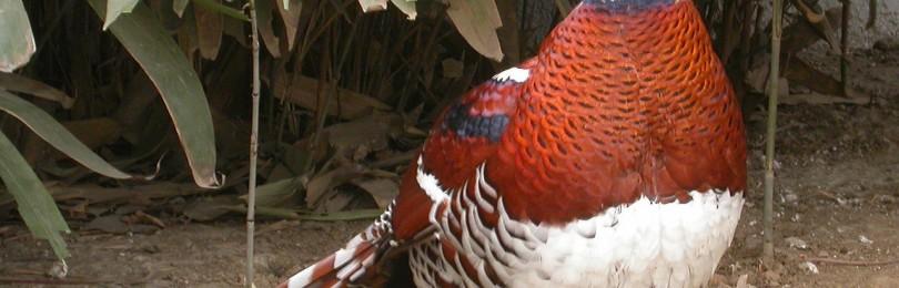 Охота на фазана с легавой в Казахстане смотреть видео онлайн