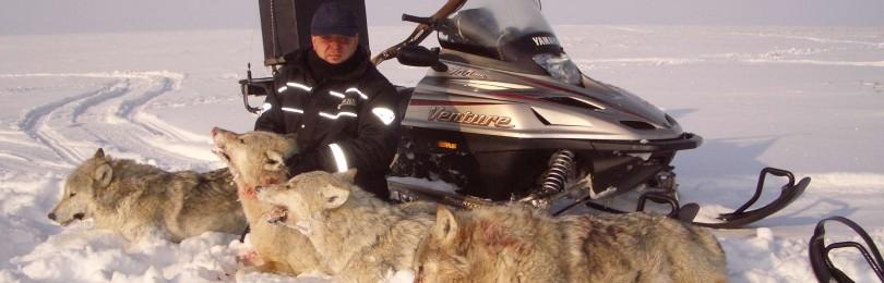 Охота на снегоходах на волка