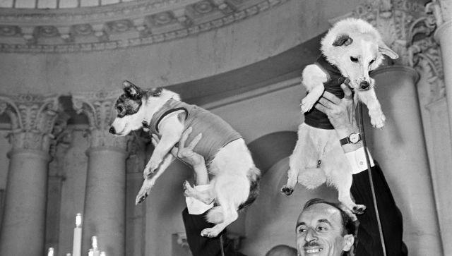 собаки космонавты