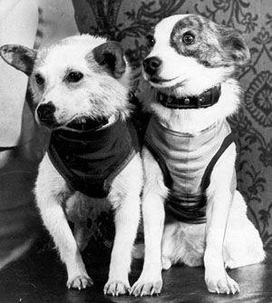 собаки в космосе википедия