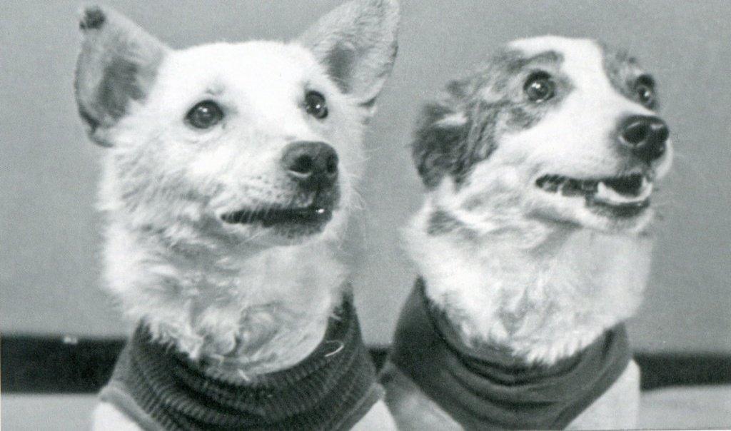 первый полет в космос собак