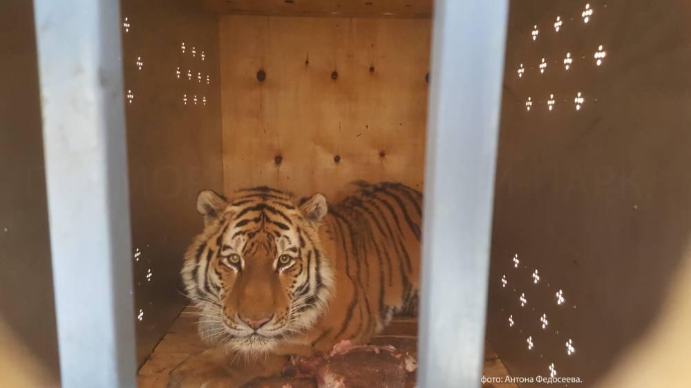 страны тигры