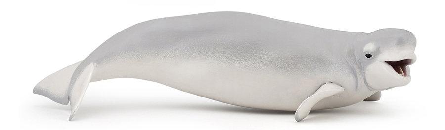 белуха млекопитающее фото