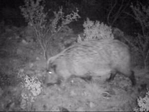Ночная охота в Аланье