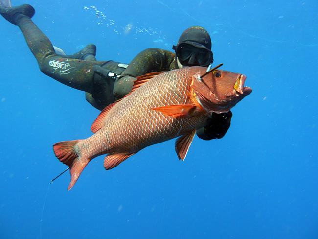 Подводная охота в Турции