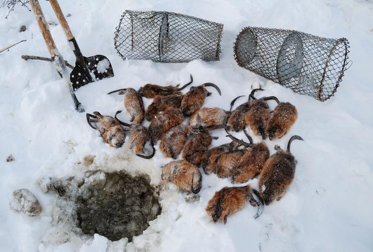 Зимний лов на мордушку