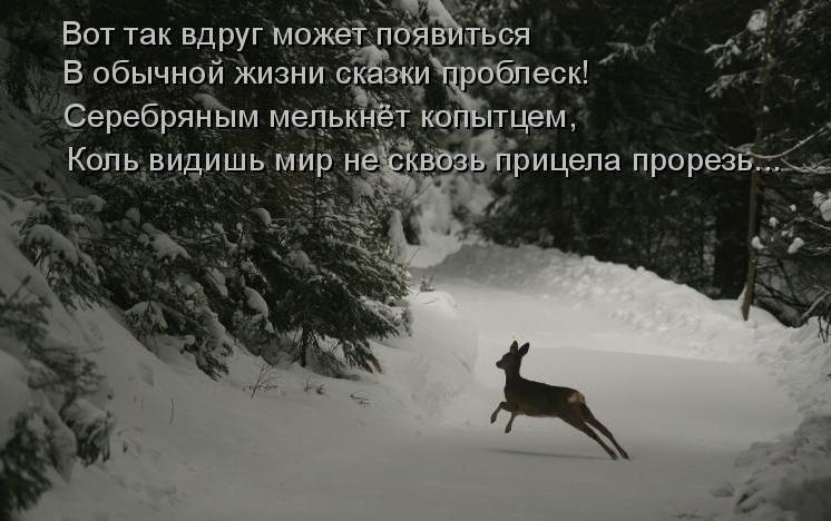 Романтика дикой природы