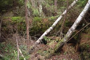 Логово под поваленным деревом