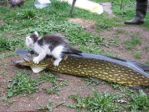 Вот это настоящий рыбак!!!