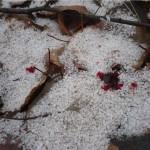 На снегу след хорошо виден