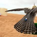 Навигатор на ловчей птице