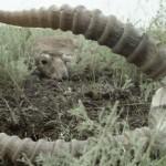 Погибших животных очень много